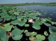 اکسیژن درون آب تالاب انزلی کاهش یافت