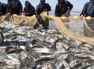 پیشبینی صید ۳ هزار تن ماهی ازدریای کاسپین/فصل صید آغاز شد