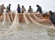 ماهی کفال بیشترین ماهی گرفتارشده در تور صیادان