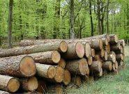اراضی ملی گیلان برای زراعت چوب واگذار میشود